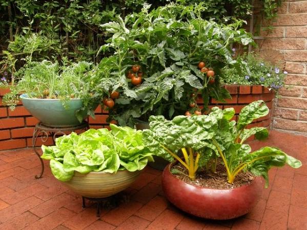 Container-Vegetable-garden