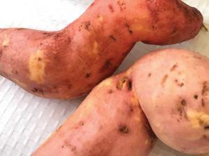 Homegrown Sweet Potato